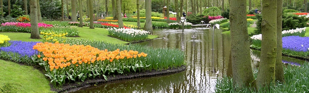 Holland is gorgeous in the spring. See the slendor of tulips in Holland, and Gouda, Delft, and more aboard a barge cruise in Holland.