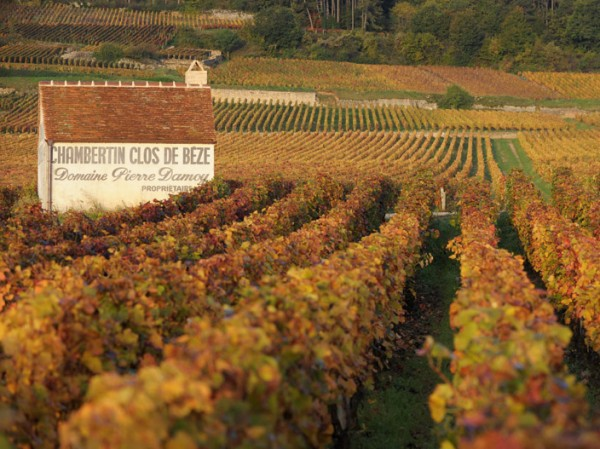 Experience a beautiful autumn cruise when the grapes are ripe for harvest